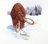 ******** Paleozoology - Pliocene/Pleistocene period - Extinct mammals - Herd of mammoths (Mammuthus primigenius)
