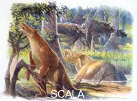 ******** Paleozoology - Cenozoic period - Extinct mammals - Barylamda, Coryphoden e Uintatherium - artwork picture by James Robins