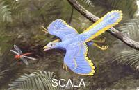 ******** Paleozoology - Eocen period - Fossil birds - Archaeopteryx hunting a dragonfly - artwork by John Cox