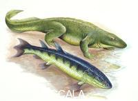 ******** Paleozoology - Devonian period - Tetrapodsand extinct fishes - Ichthyostega and Eusthenopteron - artwork picture by Steve Roberts